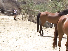 Hot day in the life of a stable boy
