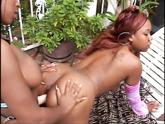 Two chubby ebony chicks having sex