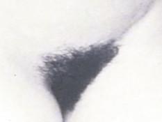 Компиляция эротических фотографий популярной певицы Мадонны