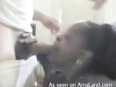 Белый мужчина дрочит свой член и заливает спермой лицо мулатки