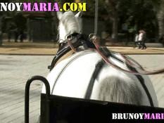 Блондинка сосала парню член в конном экипаже и ебалась раком в парке