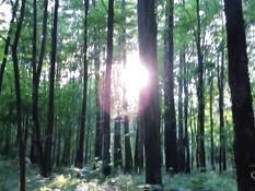 Сексуальная русская красотка завела парня в лес и высосала сперму