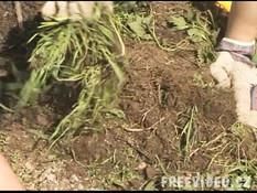 Грудастая молодая шатенка сосёт член и трахается с парнем на огороде