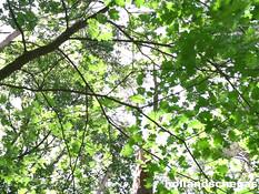 Темноволосая девушка ебётся с незнакомым парнем посреди летнего леса